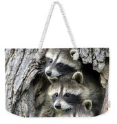 Raccoon Trio At Den Minnesota Weekender Tote Bag by Jurgen and Christine Sohns