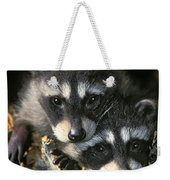 Raccoon Young Procyon Lotor In Tree Weekender Tote Bag