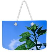 Reaching For Sunlight Weekender Tote Bag