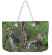 Red-billed Hornbills Weekender Tote Bag