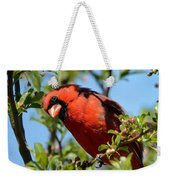 Red Cardinal In Springtime Weekender Tote Bag