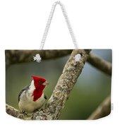 Red Crested Cardinal Weekender Tote Bag by Belinda Greb