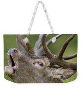 Red Deer Cervus Elaphus Stag Bugling Weekender Tote Bag
