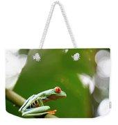 Red Eyed Tree Frog, Agalychnis Weekender Tote Bag