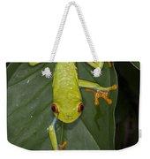 Red-eyed Tree Frog Costa Rica Weekender Tote Bag