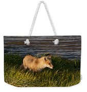 Red Fox Hunting The Edges At Sunset Weekender Tote Bag