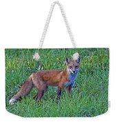 Red Fox In A Field Weekender Tote Bag