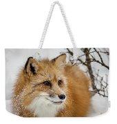 Red Fox In Snow Weekender Tote Bag