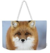 Red Fox Staring At The Camerachurchill Weekender Tote Bag