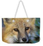 Red Fox Vulpes Vulpes, Gros Morne Weekender Tote Bag