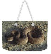 Red Rattlesnake Baja California Mexico Weekender Tote Bag