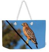 Red-shouldered Hawk On A Wire Weekender Tote Bag
