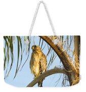 Red-shouldered Hawk On The Palm Tree Weekender Tote Bag