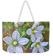 Red-spotted Saxifrage Along Horseshoe Lake Trail In Denali Np-ak  Weekender Tote Bag