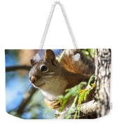 Red Squirrel In The Sun Weekender Tote Bag