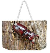 Reddish-brown Stag Beetle - Lucanus Capreolus Weekender Tote Bag
