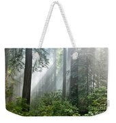 Redwood Forest With Sunbeams Weekender Tote Bag