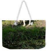 Reflected Cute Little Lamb Weekender Tote Bag