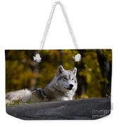 Resting Arctic Wolf On Rocks Weekender Tote Bag