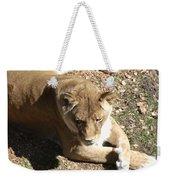 Resting Lioness Weekender Tote Bag