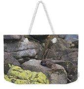 Resting Seal Weekender Tote Bag