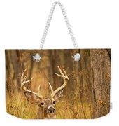Resting White-tailed Deer Buck Weekender Tote Bag