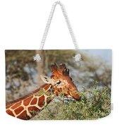 Reticulated Giraffe Browsing Acacia Kenya Weekender Tote Bag