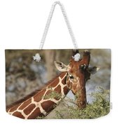 Reticulated Giraffe Feeding On Acacia Weekender Tote Bag