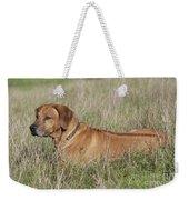 Rhodesian Ridgeback Dog Weekender Tote Bag