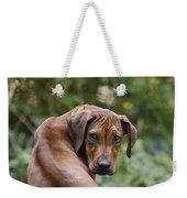 Rhodesian Ridgeback Puppy Weekender Tote Bag