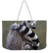 Ring-tailed Lemur Lemur Catta  Weekender Tote Bag
