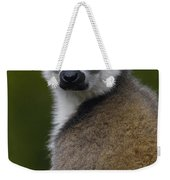 Ring-tailed Lemur Portrait Madagascar Weekender Tote Bag