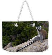 Ring-tailed Lemur Resting Madagascar Weekender Tote Bag