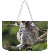 Ring-tailed Lemur Sitting Madagascar Weekender Tote Bag