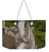 Ring-tailed Lemur Standing Madagascar Weekender Tote Bag