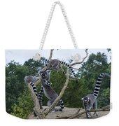 Ring Tailed Lemurs Playing Weekender Tote Bag