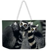 Ringtailed Lemurs Portrait Endangered Wildlife Weekender Tote Bag