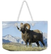Rocky Mountain Big Horn Sheep Weekender Tote Bag by Bob Christopher