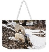 Rocky Mountain Goats - Mother And Baby Weekender Tote Bag