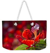 Royal Poinciana - Flamboyant - Delonix Regia Weekender Tote Bag