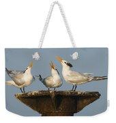 Royal Tern Trio Displaying Dominican Weekender Tote Bag