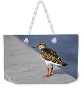 Ruddy Turnstone Bird Arenaria Interpres Florida Usa Weekender Tote Bag