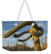 Saguaro Cacti Saguaro Np Arizona Weekender Tote Bag