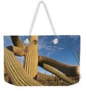 Saguaro Cactus Saguaro Np Arizona Weekender Tote Bag