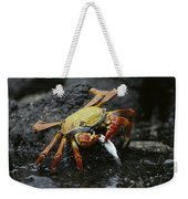 Sally Lightfoot Crab Feeing Galapagos Weekender Tote Bag