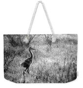 Sandhill Chick In The Marsh - Black And White Weekender Tote Bag