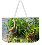 Sandhill Crane Chicks  Weekender Tote Bag