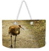 Sandhill Crane On The Road Weekender Tote Bag