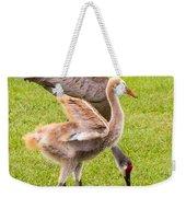 Sandhill Cranes Walking Around Weekender Tote Bag