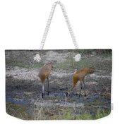 Sandhill Stork Weekender Tote Bag
